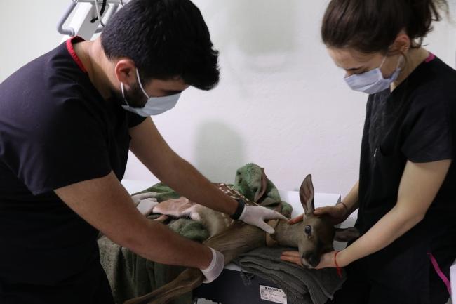 Yaralı bulunan geyik yavrusu koruma altına alındı