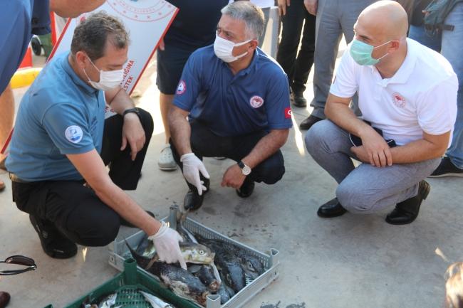 Antalya'da balon balığı alımları başladı
