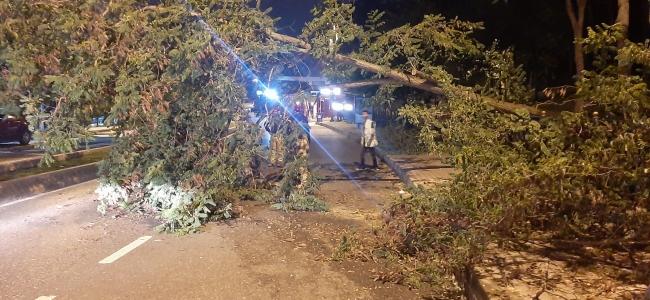 Yola ağaç devrildi, trafik bir süre durdu