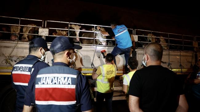 Kurbanlıkların İstanbul'a girişi başladı