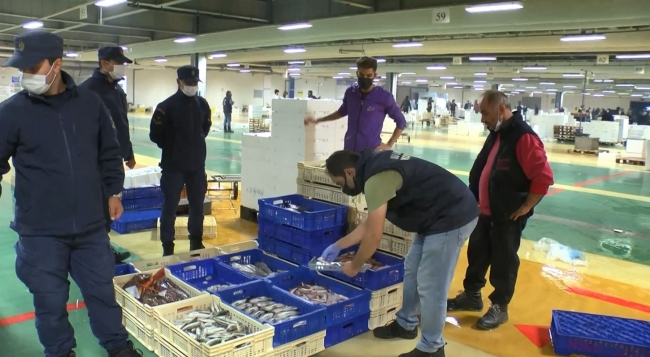 About 9 tons of fish caught in violation of the size ban were seized