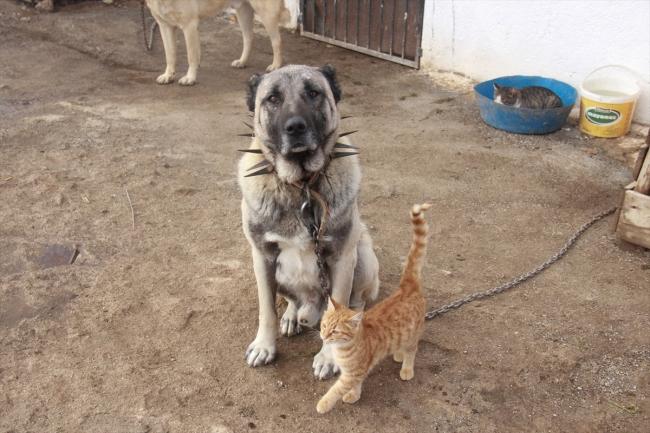 Kangallarla kedilerin dostluğu dikkat çekiyor