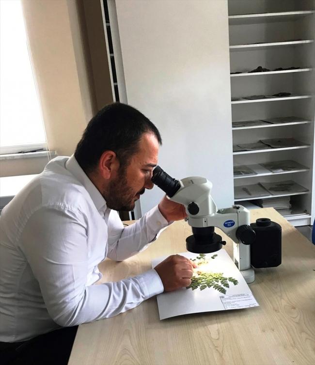 20200612 2 42932613 55871743 Web Küre Dağları'nda yeni bir endemik bitki türü keşfedildi 1