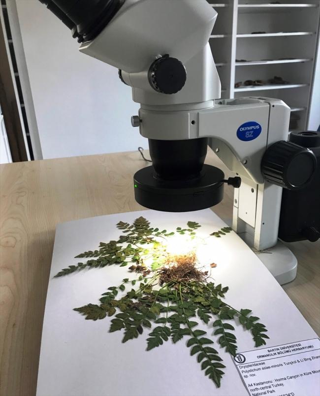 20200612 2 42932613 55871744 Web Küre Dağları'nda yeni bir endemik bitki türü keşfedildi 4