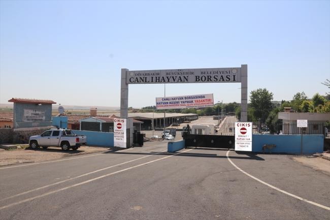 20200706 2 43304589 56474405 Web Diyarbakır Canlı Hayvan Borsası yeniden hizmete açıldı 3