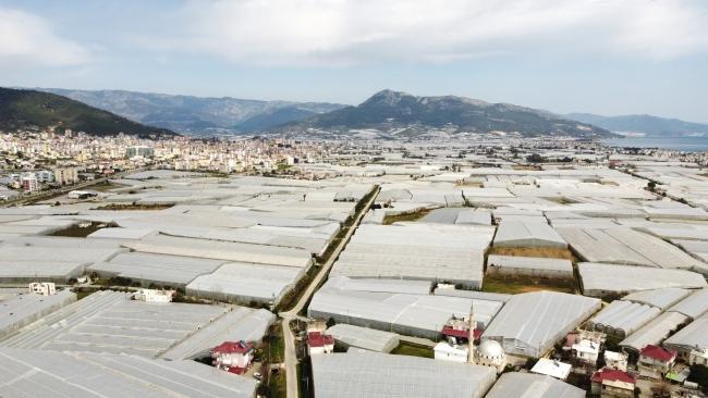 Devlet desteğiyle genişleyen seralarda üretim arttı