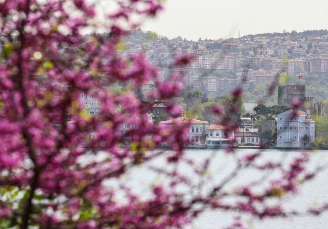 İstanbul'da erguvan zamanı başladı