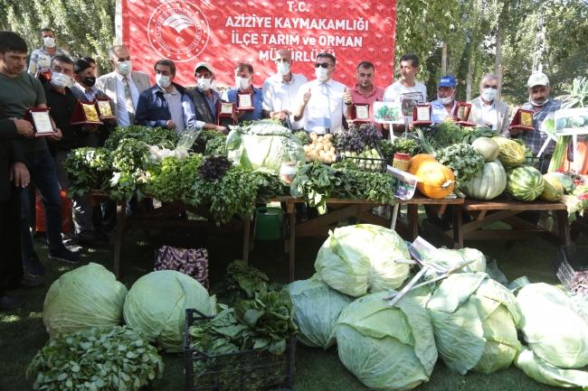 İki bin rakımlı ovada meyve ve sebze hasadı