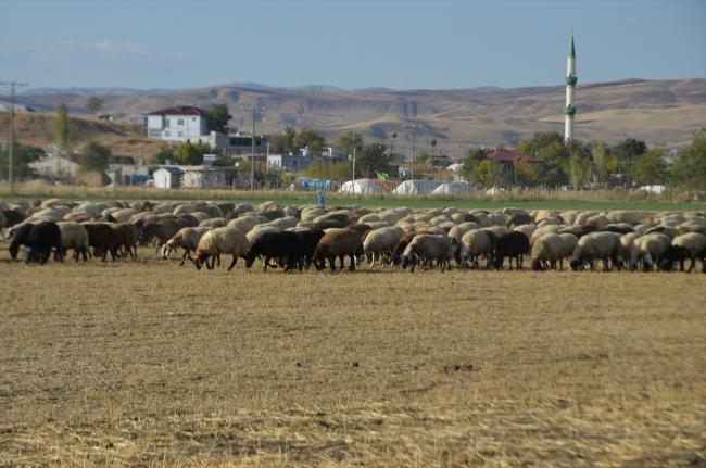 Muş, hayvancılıkta ülke ekonomisine yıllık 4 milyar lira katkı sağlıyor