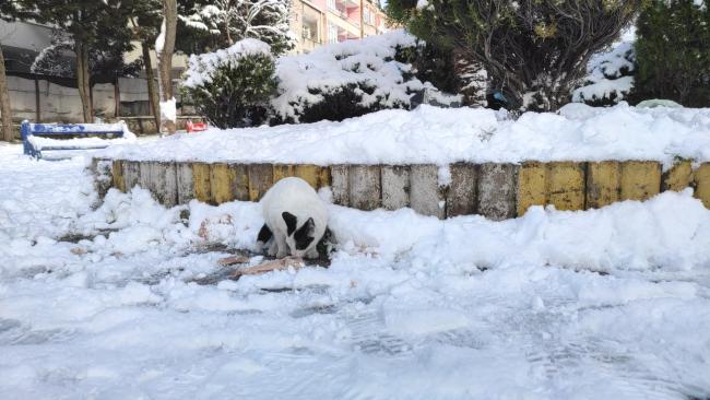 Sokak hayvanlarının sağlığını nasıl koruyabiliriz?