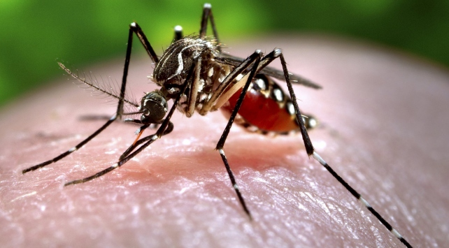 Sıtma bulaşıcı mıdır?