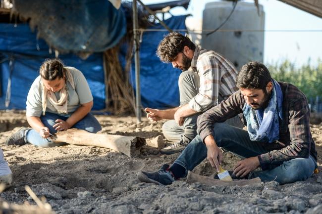 Kahramanmaraş'ta yeni fil fosilleri bulundu