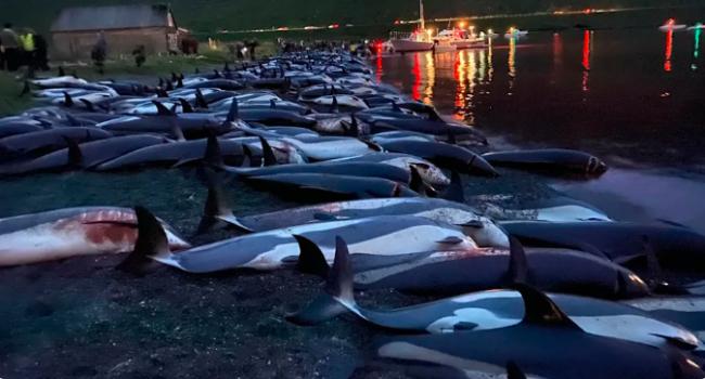 Fotoğraf: Sea Shepherd