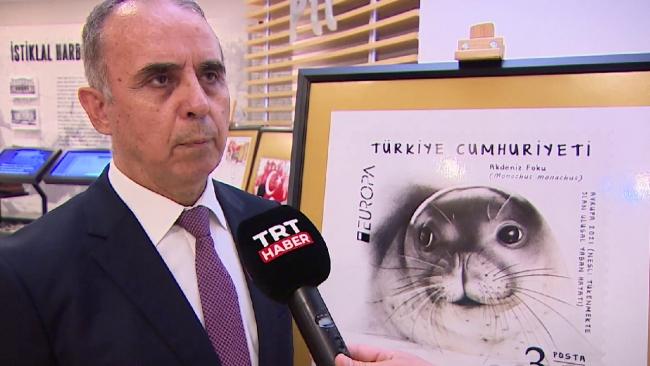 Avrupa Pulu Yarışması'nda Türkiye'yi Akdeniz foku Badem temsil edecek