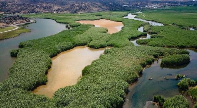 Yeşili ve sulak alanlarıyla kartpostallık görüntüler oluşturan Ağrı Dağı Milli Parkı / Fotoğraf: AA