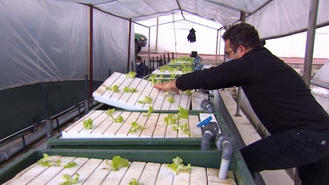 Antalya'da balıkların yetiştirildiği suda sebze üretiliyor