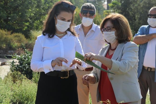 Çukurova'nın şifalı bitkileri Türkiye'ye tanıtılacak