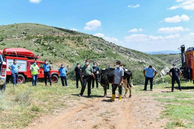 kanyonda mahsur kalan gebe inek yaylagulu itfaiyeciler kurtardi 6859 dhaphoto10 Kanyonda mahsur kalan ineği itfaiye ekipleri kurtardı 2