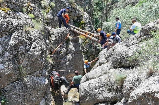 kanyonda mahsur kalan gebe inek yaylagulu itfaiyeciler kurtardi 6859 dhaphoto8 Kanyonda mahsur kalan ineği itfaiye ekipleri kurtardı 1