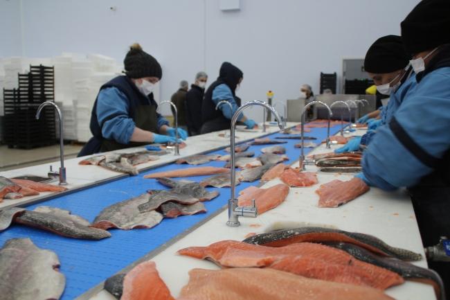 Rize'den Rusya'ya karadeniz somonu ihracatı