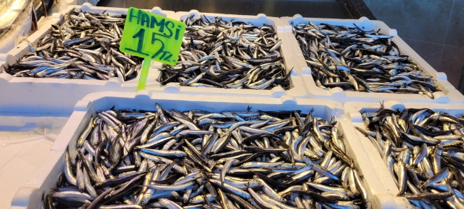 Karadeniz'de hamsi bolluğu: Fiyat yarı yarıya düştü