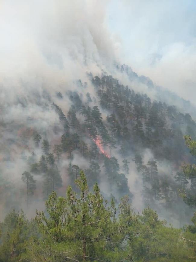 Osmaniye ve Kayseri'de orman yangını: Müdahale sürüyor