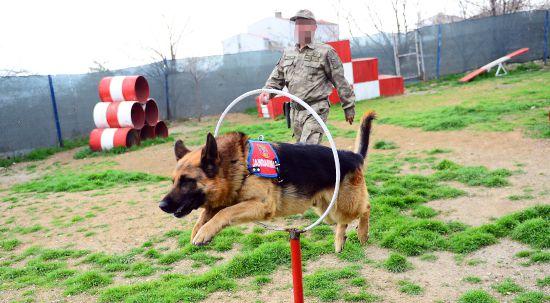 Jandarma Köpek Timleri ile ilgili görsel sonucu