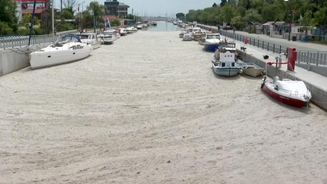 Müsilajın istila ettiği İstanbul sahillerinde temizlik başladı
