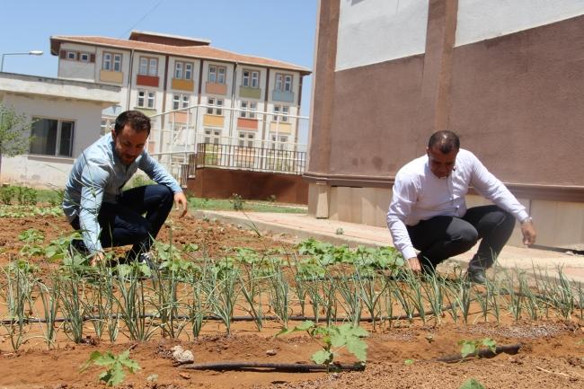 okulun bahcesinde yetistirilen sebze ve meyveler ihtiyac sahiplerine dagitilacak 2220 dhaphoto6 Okulun bahçesinde yetiştirilen sebze ve meyveler ihtiyaç sahiplerine dağıtılacak 2