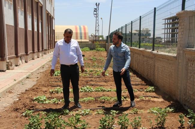 okulun bahcesinde yetistirilen sebze ve meyveler ihtiyac sahiplerine dagitilacak 2220 dhaphoto7 Okulun bahçesinde yetiştirilen sebze ve meyveler ihtiyaç sahiplerine dağıtılacak 1