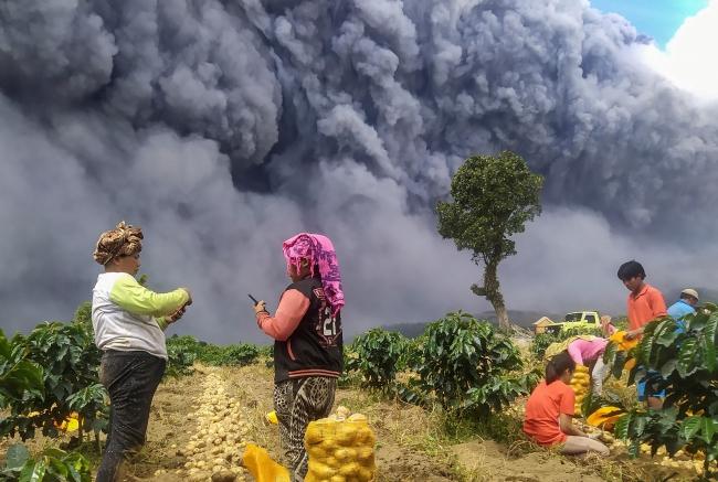 Sinabung Yanardağı'ndaki hareketliliğe rağmen bölgede patatas hasadı sürüyor.   Fotoğraf: Reuters