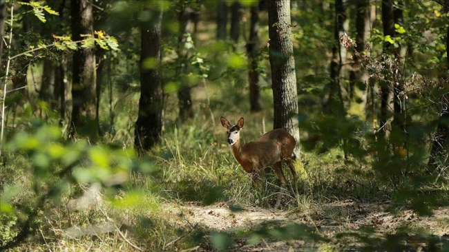 Kocaeli'deki Uzuntarla Tabiat Parkı / Fotoğraf: AA