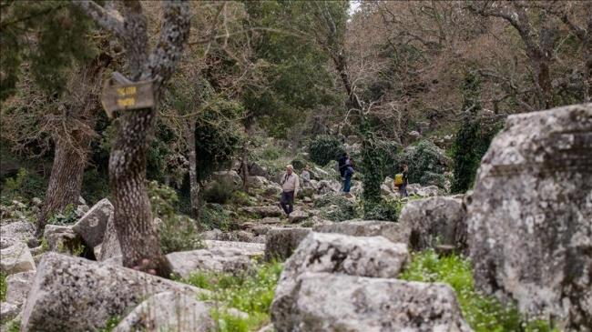 Antalya'da ender türleri barından Termessos Milli Parkı / Fotoğraf: AA