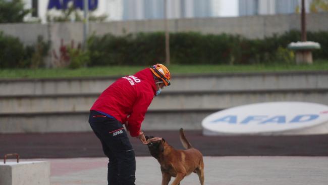 AFAD'ın kahraman köpekleri